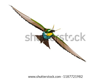 colorful bird flying realistic