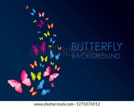 colorful butterfly isolated on