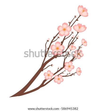colorful close up sakura branch
