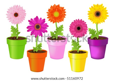 Colorful Daisies In Pots, Isolated On White