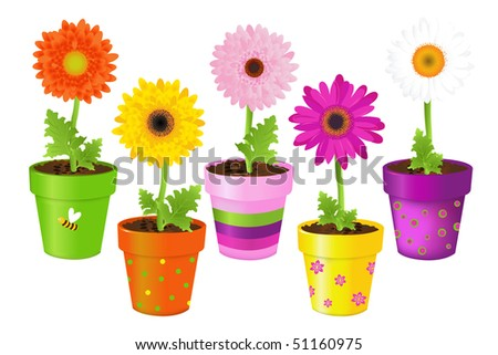 Colorful Daisies In Pots With Pictures, Isolated On White