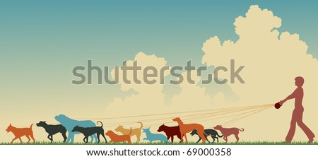Colorful editable vector silhouette of a woman walking many dogs with copy space