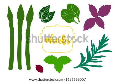 Colorful kitchen herbs vector set with herbs text on the pot. Hand drawn leaves of rosemary, basil, mint, oregano, thyme and asparagus. Spices template. Design elements for restaurant menu.
