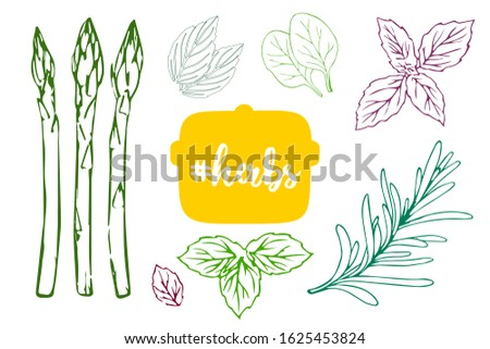 Colorful kitchen herbs vector set with herbs text on the yellow pot. Hand drawn leaves of rosemary, basil, mint, oregano, thyme and asparagus. Spices template. Design elements for restaurant menu.