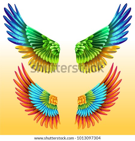 Colorful Macaw Wings