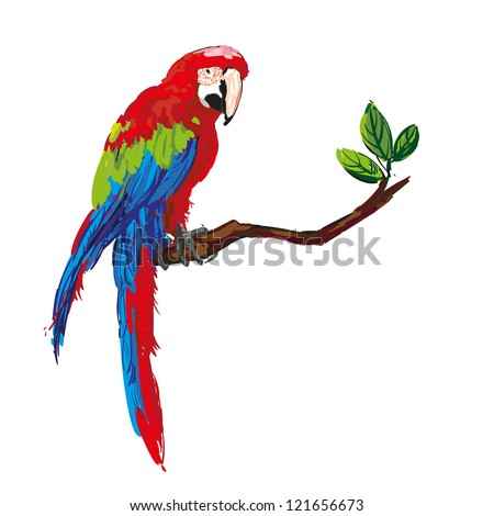 colorful parrot isolated in white background vector illustration