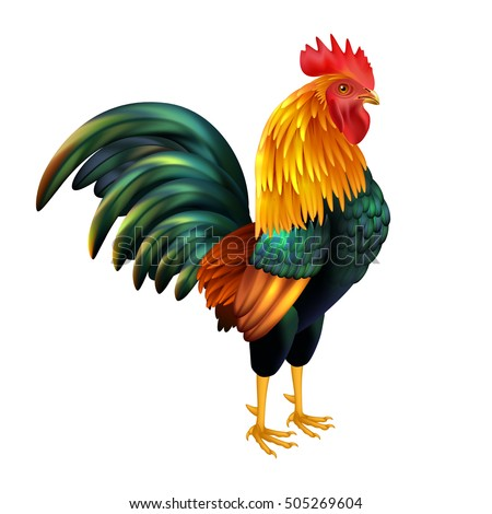 colorful realistic rooster as