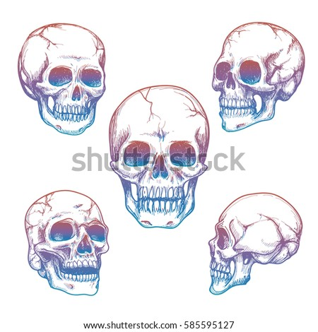 colorful skull collection