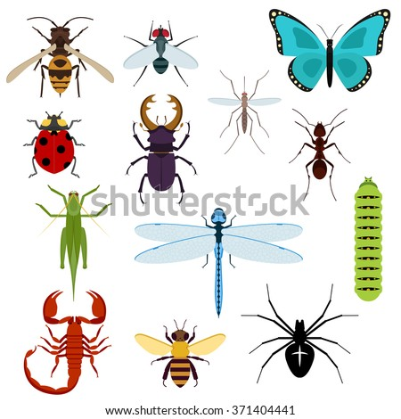colorful top view insects icons