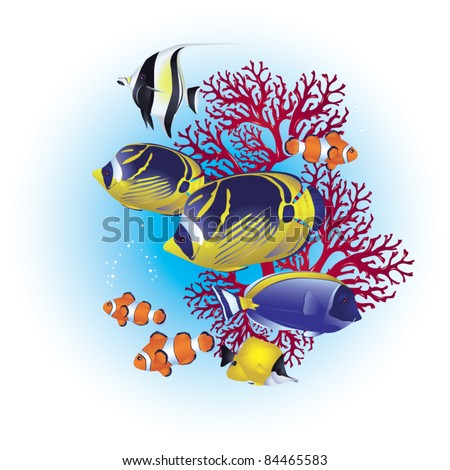 colorful tropical fish on a