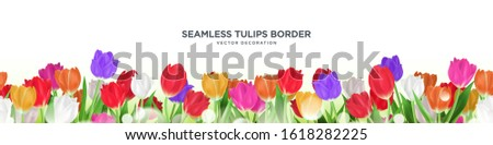 colorful tulips flower border