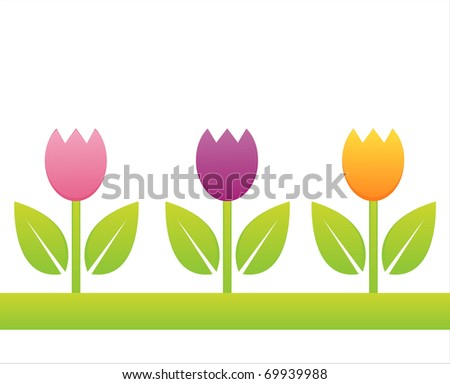 colorful tulips isolated on