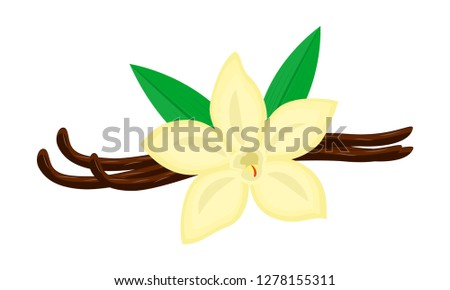 Colorful vanilla flower and pods vector illustration isolated on white background. Vanilla logo