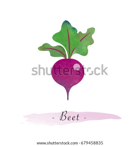 Colorful watercolor texture vector healthy vegetable beet