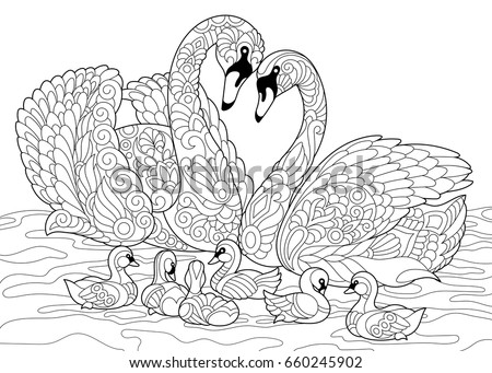 Stock Photo Coloring book page of swan birds family. Freehand sketch drawing for adult antistress colouring with doodle and zentangle elements.