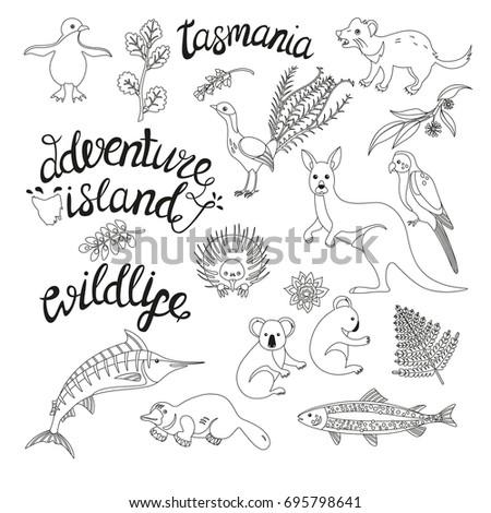 Coloring book with a contour and color example. Fauna of Tasmania (kangaroo, parrot, marlin).