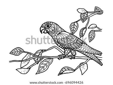 Coloring Page Book   Parrot Bird Color
