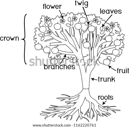 Parts Of A Flower Bulb