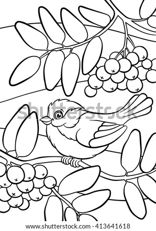 Watercolor Coloring Pages Birds Little Cute Titmouse Sits On The Mountain Ash
