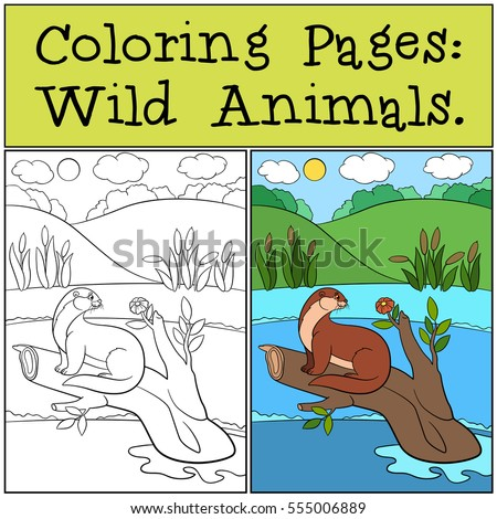 coloring pages  wild animals