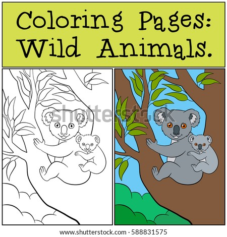 coloring pages wild animals mother koala sits on the tree branch