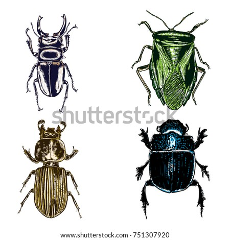 colour insect stipple drawing