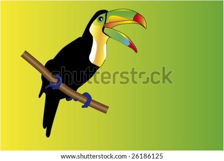 coloured bird