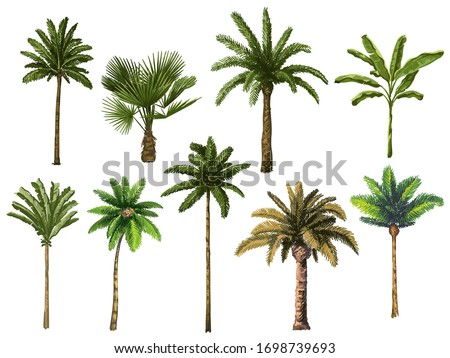 Colourful hand drawn palm tree. Retro tropical coconut trees, vintage miami palms vector illustration set. Tropical tree palm, green floral botanical
