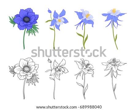 Columbine, aquilegia, anemone flowers.