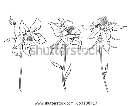 Columbine flowers. Set of outline flowers.