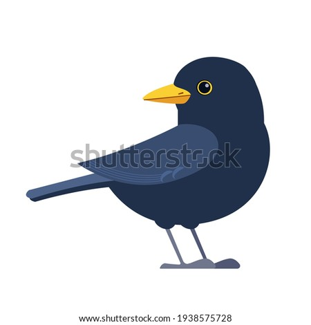 Common blackbird is a species of true thrush. It is also called Eurasian blackbird. Scientific name: Turdus merula. Cartoon flat style character of ornithology, vector illustration isolated on white. Stock photo ©