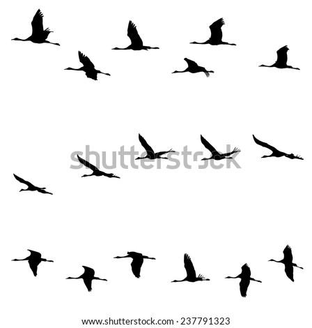 common crane in flight