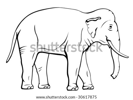 Common elephant vector illustration