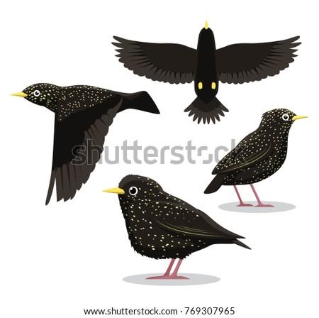 common starling cartoon vector
