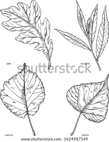 common tree leaves hand drawn