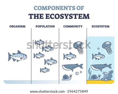 Components of environmental ecosystem with organism, population or community outline diagram. Educational labeled biology classification levels as living organisms division system vector illustration. Stock fotó ©