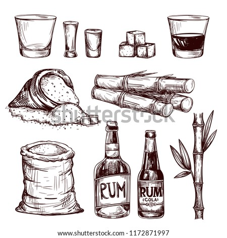 Composition of alcoholic beverage rum. Hand drawn cane leaves, sugar plant stalks, sugarcane farm harvest, glass and bottle of rum. Vector set in vintage engraving style.