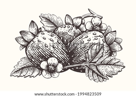 Composition with fresh strawberries, leaves and flowers isolated on white background. Healthy and beneficial organic berries. Gardening or horticulture concept. Vector illustration. Engraving style. Photo stock ©