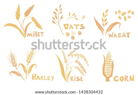 Concept for organic products label, harvest and farming, grain, bakery, healthy food. Set of simple wheats ears icons and wheat design elements, organic wheats local farm fresh food, bakery.