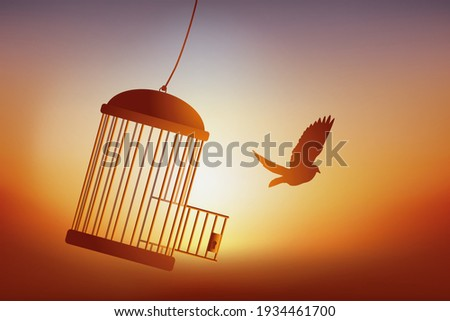 Concept of freedom, with a bird that escapes from its cage and flies away in front of a sunset. Stockfoto ©