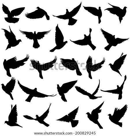 Concept of love or peace Set of silhouettes of doves Vector illustration