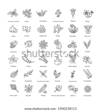 Condiment and herbs icons set. Outline set of condiment vector icons Stockfoto ©