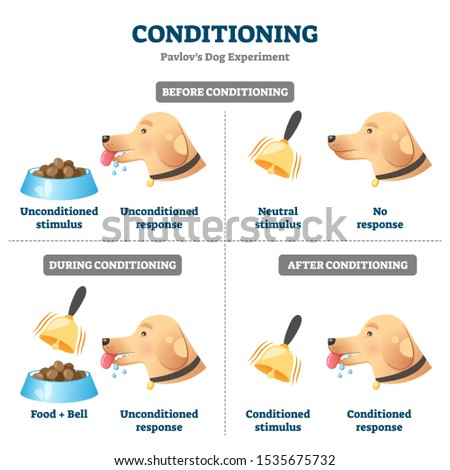 Conditioning vector illustration. Labeled Pavlovian respondent learn scheme. Dog experiment with food and bell. Salivation research diagram with behavior stimulus psychological educational explanation Foto d'archivio ©