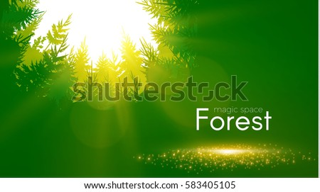 coniferous forest background