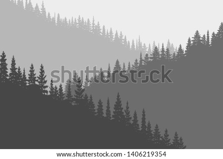 coniferous forest in the fog