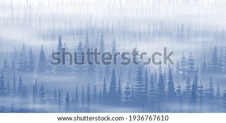 coniferous forest in the