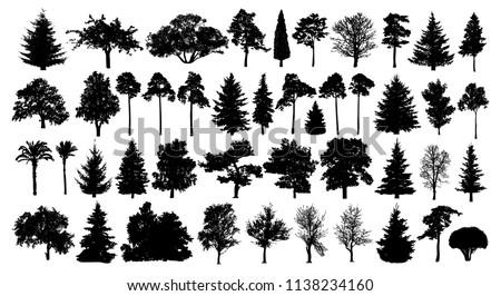 coniferous forest trees set