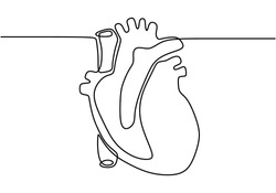 Continuous line drawing of Human heart with minimalist design isolated in one white background.