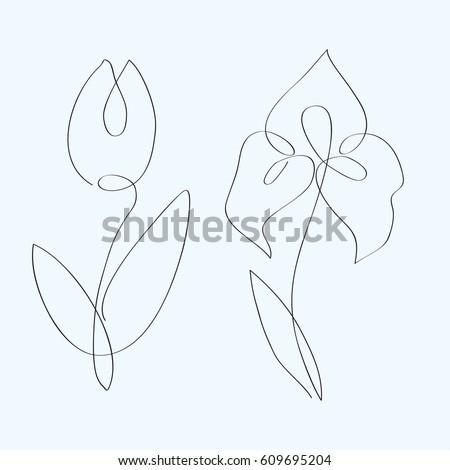 continuous line flowers tulip
