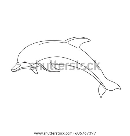 contour image of a dolphin